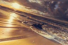 Золотой корень захода солнца и дерева на пляже Стоковая Фотография