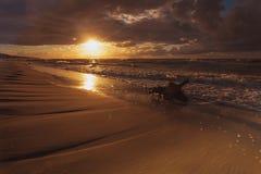 Золотой корень захода солнца и дерева на пляже Стоковая Фотография RF