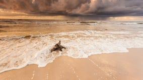 Золотой корень захода солнца и дерева на пляже Стоковое Изображение RF