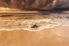Золотой корень захода солнца и дерева на пляже Стоковые Фотографии RF