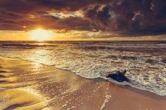 Золотой корень захода солнца и дерева на пляже Стоковое Фото