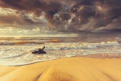Золотой корень захода солнца и дерева на пляже Стоковое фото RF