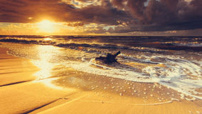 Золотой корень захода солнца и дерева на пляже Стоковые Изображения RF