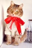 Золотой наблюданный кот с красным смычком стоковое изображение rf