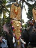 Золотой одетый индийский слон Стоковые Фотографии RF