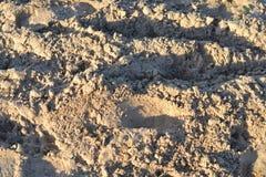 Золотой песок Стоковое фото RF