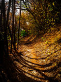 Золотой путь позеленеть Стоковое Изображение RF