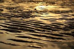 Золотой пляж песчанной дюны Стоковые Фотографии RF