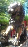 Золотой дракон в солнце Стоковая Фотография