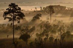 Золотой свет Стоковая Фотография RF