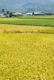 Золотой сельский пейзаж стоковые фотографии rf