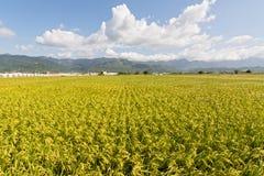 Золотой сельский пейзаж стоковое изображение rf