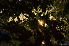 Золотой солнечный луч Стоковое фото RF