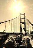 Золотой строб моста Путешествие шины Стоковое Изображение RF