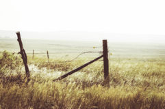 Золотой луг с загородкой и колючей проволокой в солнечном свете Стоковая Фотография