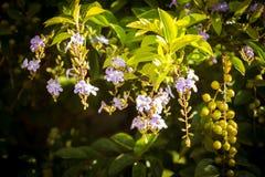 Золотой цветок капли росы Стоковые Изображения RF