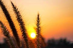 Золотой цветок Стоковое фото RF