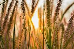 Золотой цветок Стоковое Изображение RF