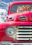 Золотой retriever в красной ретро тележке Стоковые Фотографии RF