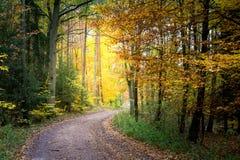 Золото и зеленая осень в лесе, Европа стоковые изображения rf