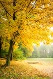 Золото и зеленый лес в осени, Европа стоковая фотография rf