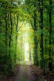 Золото и зеленый лес осенью, Европа стоковая фотография rf