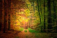 Золото и зеленый путь в лесе, Европа стоковое фото