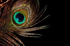 Золото пера павлина Стоковые Изображения RF