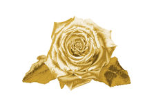 золото подняло стоковое фото