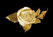 золото подняло Стоковая Фотография RF
