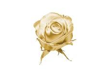 золото подняло Стоковое Изображение RF