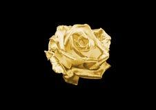 золото подняло Стоковые Изображения RF
