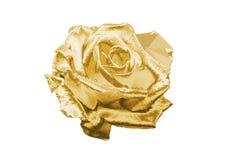 золото подняло Стоковые Фотографии RF