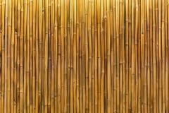 Золотые бамбуковые стена или панель Стоковое Фото