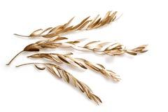 Золотые ветви Стоковое Изображение RF