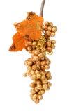 Золотые виноградины Стоковое Изображение