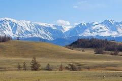 Золотые горы Altai Стоковое фото RF
