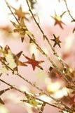 Золотые звезды рождества Стоковые Фото