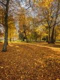 Золотые листья под деревьями осени Стоковая Фотография RF