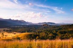 Золотые поле травы и сцена утра долины Ranong, Таиланда Стоковая Фотография RF