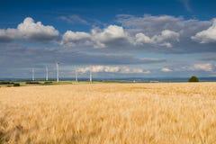 Золотые пшеничное поле и ветротурбины Стоковое фото RF