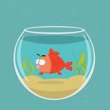 Золотые рыбы Стоковое фото RF
