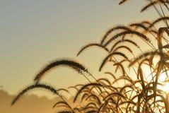 Золотые травы 2 Стоковое Изображение
