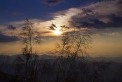 Золотые цветки травы Стоковое Изображение