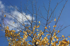 Золотые чуть-чуть ветви Стоковое фото RF
