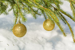 Золотые шарики рождества на ветви спруса зеленого цвета Стоковая Фотография