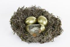 Золотые яйц из гнезда при одно сломанное яичко Стоковое фото RF