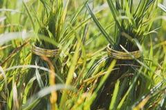 2 золотых обручального кольца на зеленой траве Стоковые Изображения