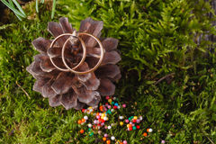 2 золотых обручального кольца на конусе Стоковая Фотография RF