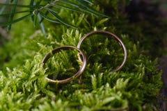 2 золотых обручального кольца на мхе Стоковые Фотографии RF